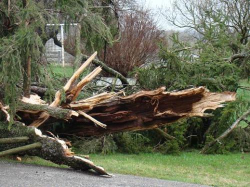 damaged-tree