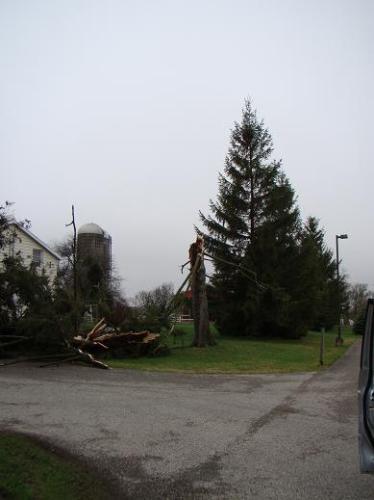 tree-broken-off