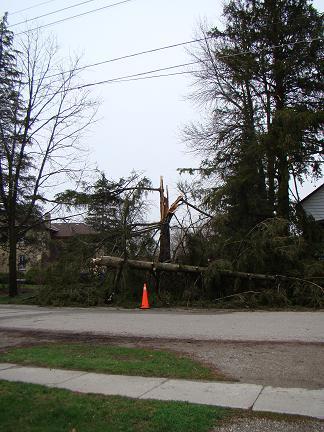 tree-broken