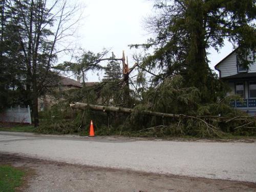 tree-fallen-at-louisa-street-baden