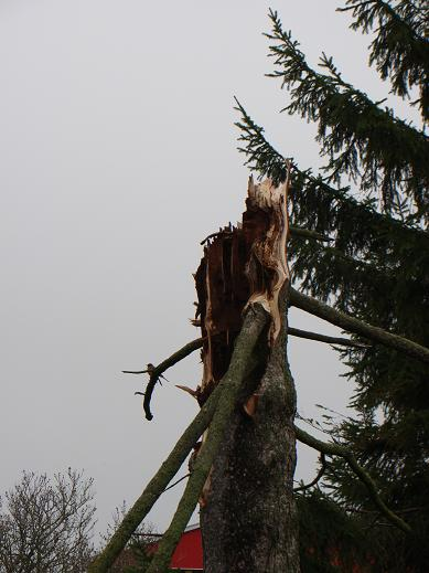 tree-snapped-off