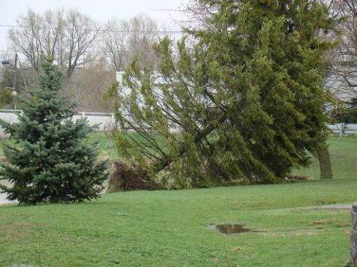 uprooted-tree-on-baden-pond