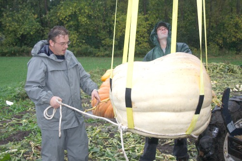 NEWS - Big Pumpkin (col)